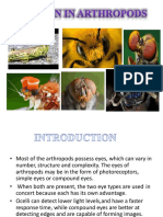 1552720144827_vision in Arthropods (1)