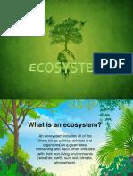Components of Ecosytem