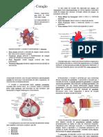 Sistema Circulatório - Coração.docx