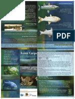 Asian Carp Brochure