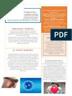 Definición de Fecundación.docx