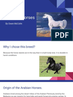 arabian horses - owen
