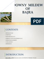 Downy Mildew Of Bajra.pptx