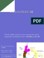 07 - Ciclo Celular
