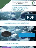 Metabolismo Del Nitrógeno