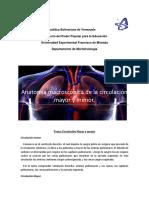 Anatomia macroscopica de la circulacion mayor y menor.docx