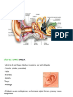 Anatomia Oi Do
