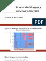 Efecto de  la Aw.pdf