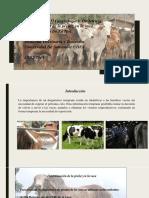 Determinacion de La Preñez en La Vaca