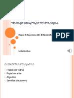 germinador 2.pptx