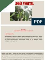 Tema 10 Crecimiento y Desarrollo de Plantas