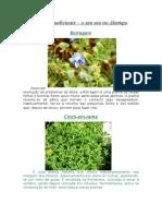 Plantas medicinais- Alentejo