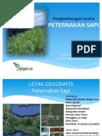 Peternakan Sapi Spada 2019