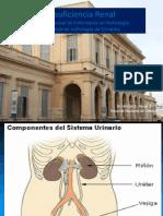 Insuficiencia renal aguda y cronica 2017 (1).pptx