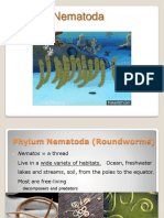 3 - phylum nematoda weebly