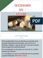 Coccidosis en Cuyes