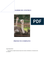 Cria de avestruz a nivel Industrial