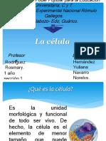 Diapositivas de Las Celulas