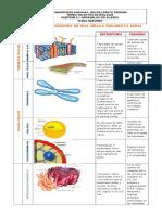 guia 2 organelo celular