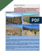 01 - Forestación y Reforestación