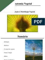 Aula 1_Morfologia vegetal-1.pdf