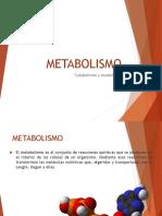 Metabolismo PPT