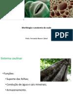 Aula 7_Morfologia e Anatomia Da Caule-1