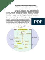 1er. Tarea Rutas biosintéticas.docx