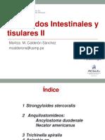 TEORIA 13 Nematodos  2 USMP.pdf
