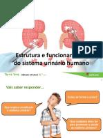 Estrutura e Uncionamento Sistema Urinário