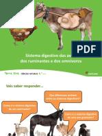 Sistema Digestivo Aves, Ruminantes e Omnivoros