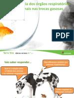 U5 Importancia Orgaos Respiratorios Animais Final