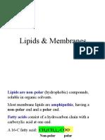 2-lipid membran.ppt