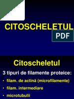 Curs Citoscheletul, Jonctiuni, Specializari Curs 2015 2016