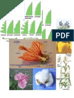Catalogo de plantas de la región.doc