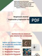 Presentación Para Exposición Sistema Respiratorio