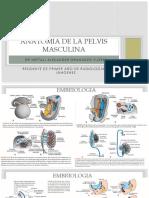 Anatomia Radiologica de Pelvis Masculina