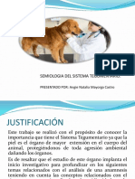 SISTEMA TEGUMENTARIO EXP.pptx