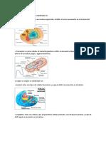 Clases de celula.docx