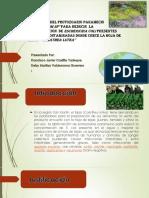 Aplicación Del Protozoario Paramecio