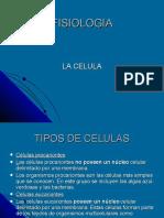 celula-12002950854576-2