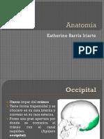 Anatomía 1.pptx