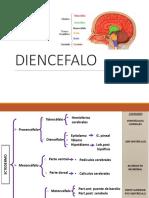 Diencefalo - corteza cerebral