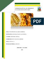 funciones de las abejas obreras.docx