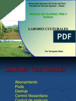 Labores Culturales Del Platano