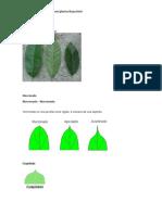coleccion de hojas.docx