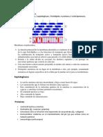 cuestionario de micro.docx