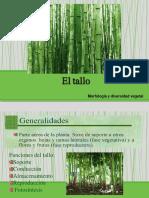 El tallo morfologia .pdf