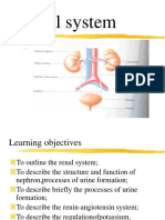 Renal-system Ppt 2019