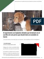 El Experimento Con Implantes Dentales Que Terminará Con El Sacrificio de Seis Perros Que Desató Todo Un Escándalo en Suecia _ Publimetro Chile